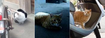 ネコ三態.jpg